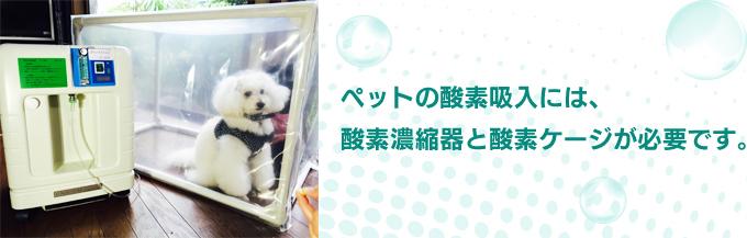 ペットの酸素吸入には、酸素濃縮器と酸素ケージが必要です。