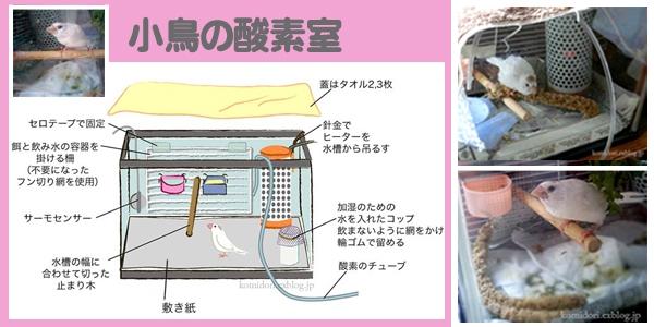 小鳥酸素室